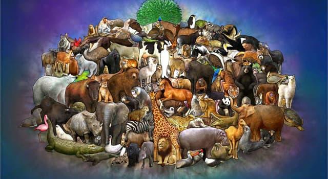 Naturaleza Pregunta Trivia: ¿Qué es el kagú?