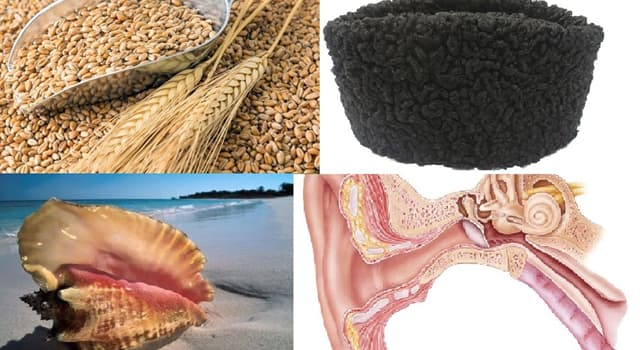Naturaleza Pregunta Trivia: ¿Qué es el Karakul?