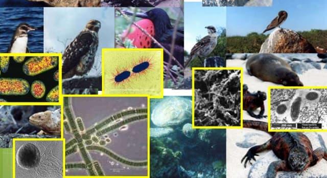 Сiencia Pregunta Trivia: ¿Qué es la taxonomía biológica?