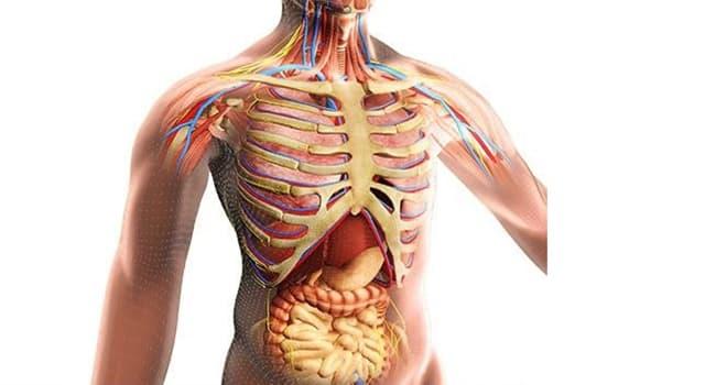 Naturaleza Pregunta Trivia: ¿Qué función cumple el mesenterio en el cuerpo humano?