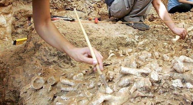 Сiencia Pregunta Trivia: ¿Qué hallazgo hizo el paleontólogo Philip Gingerich en 2004?