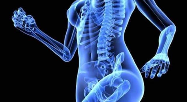 Сiencia Pregunta Trivia: ¿Qué minerales están disminuidos en el padecimiento de Osteopenia?