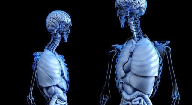 Сiencia Pregunta Trivia: ¿Qué nuevo órgano ha sido descubierto por el patólogo Neil Theise de la Universidad de Nueva York?