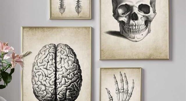 Сiencia Pregunta Trivia: ¿Qué órgano del cuerpo humano no siente dolor?