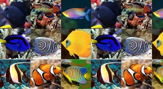 """Naturaleza Pregunta Trivia: ¿Qué particularidad hace famoso al pez llamado """"piloto""""?"""