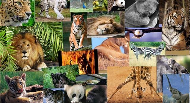 Naturaleza Pregunta Trivia: ¿Qué son las vibrisas en los animales?