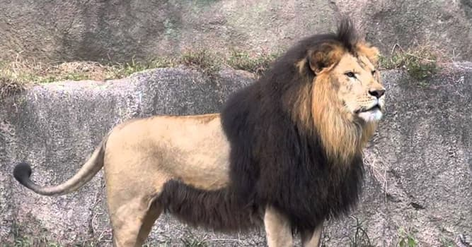Naturaleza Pregunta Trivia: ¿El león del Atlas era nativo de qué parte del mundo?