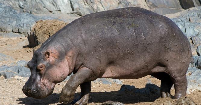 Natur Wissensfrage: Von was ernährt sich das Flusspferd?