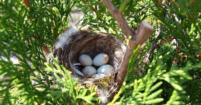 Natur Wissensfrage: Welcher Vogel legt das kleinste Ei?