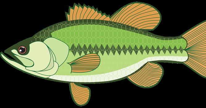 Naturaleza Pregunta Trivia: ¿Cómo se mueven los peces?