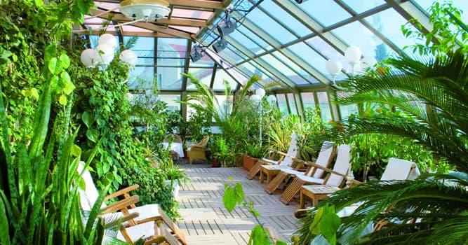 Sociedad Pregunta Trivia: ¿Cómo se llama el espacio que se usa para que las plantas puedan crecer durante todo el año?