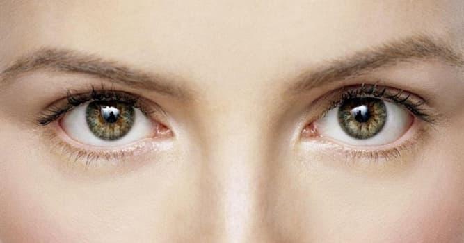 Naturaleza Pregunta Trivia: ¿Cómo se llama el fenómeno en el que se percibe luz sin que esta entre al ojo?
