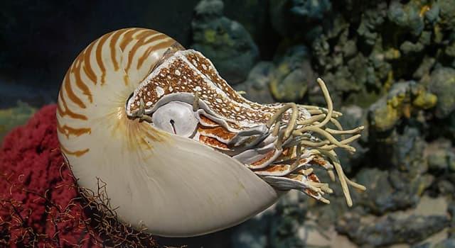 Naturaleza Pregunta Trivia: ¿Dónde se pueden encontrar los nautilos?