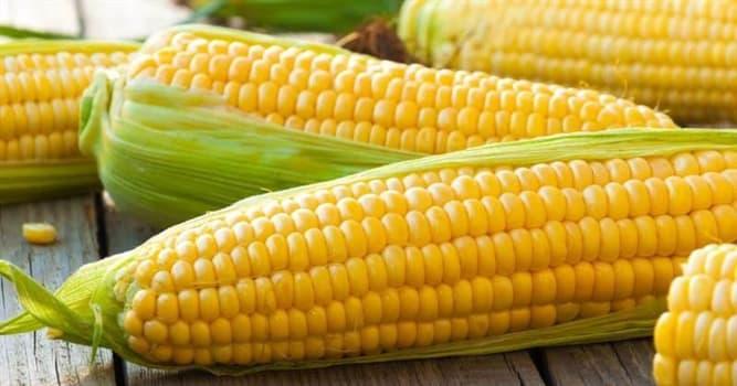 Cultura Pregunta Trivia: ¿Cuál fue el primer país en cultivar maíz?