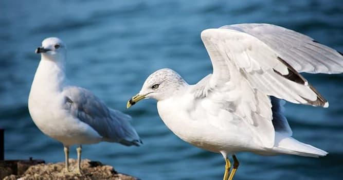 Naturaleza Pregunta Trivia: ¿A cuál de estas aves no se le ven las alas?