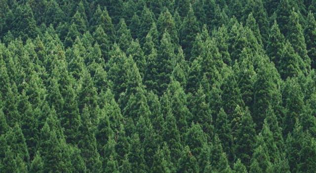 Naturaleza Pregunta Trivia: ¿Cuál de estas denominaciones describe mejor a los cedros?