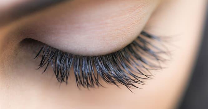 Wissenschaft Wissensfrage: Wie ist die durchschnittliche Lebensdauer der menschlichen Augenwimper?