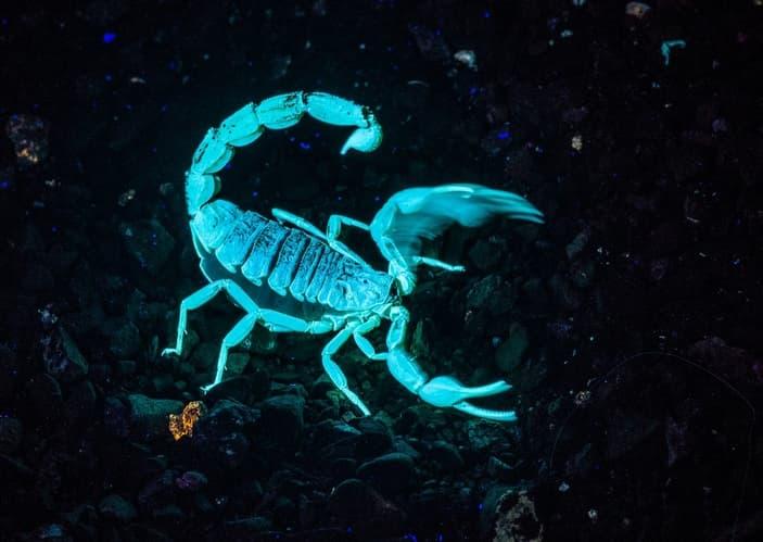 природа Запитання-цікавинка: Чим вкрите все тіло скорпіона?