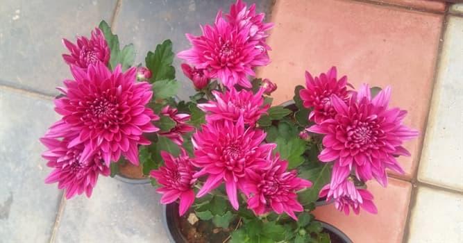 Сiencia Pregunta Trivia: ¿Cómo se llaman las flores de la imagen?