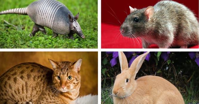 Naturaleza Pregunta Trivia: ¿Cuál de los siguientes animales puede pausar su embarazo?