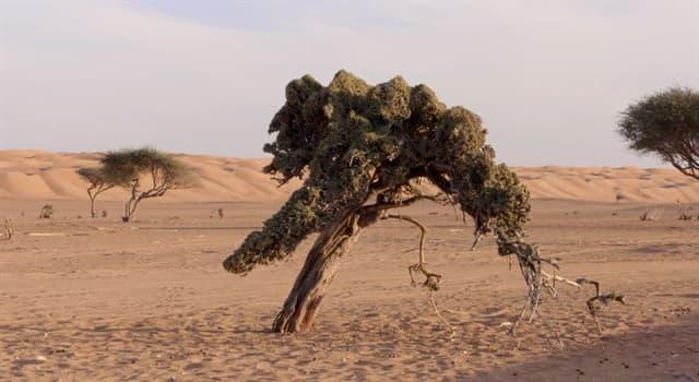 Geografía Pregunta Trivia: ¿Cuál de los siguientes no es un desierto?