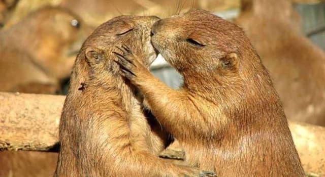 Naturaleza Pregunta Trivia: ¿Cuántas especies del género biológico de los perritos de las praderas existen?