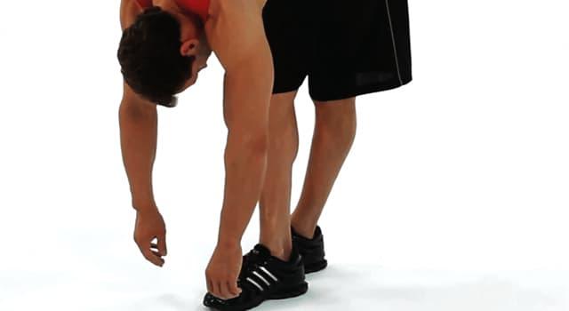 Сiencia Pregunta Trivia: ¿Cuántos son los músculos isquiotibiales?