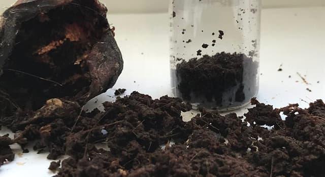 Naturaleza Pregunta Trivia: ¿De dónde se extrae principalmente el almizcle?