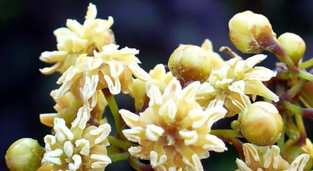 Сiencia Pregunta Trivia: ¿El genoma de qué flor, endémica de Nueva Caledonia, están descifrando varios equipos de investigadores?