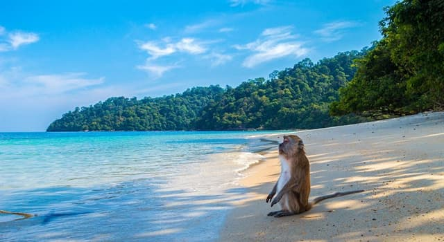 Geografía Pregunta Trivia: ¿En qué país se encuentra la isla Ko Samui?