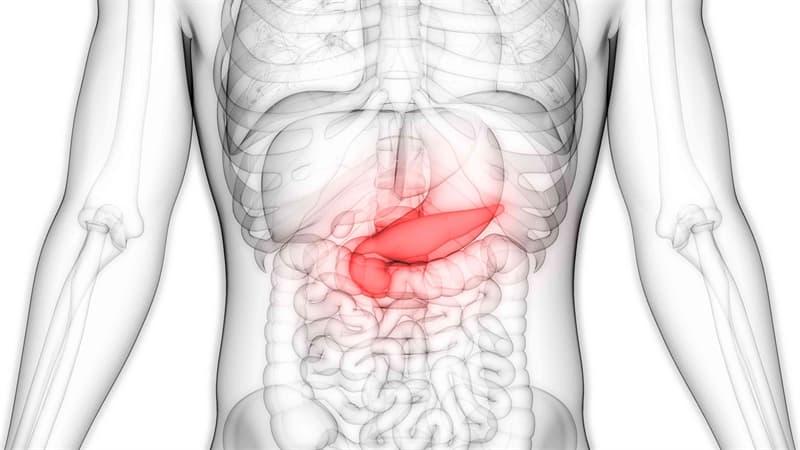 Сiencia Pregunta Trivia: ¿En qué parte del cuerpo humano se encuentra el páncreas?