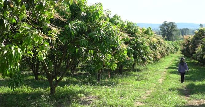 Naturaleza Pregunta Trivia: ¿Qué fruta tiene las variedades Gala, Fuji y Granny Smith?