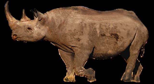 Cultura Pregunta Trivia: ¿Qué tipo de criatura era el unicornio en la antigua historia natural?