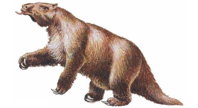 Naturaleza Pregunta Trivia: ¿Cuál de estos animales está extinto?
