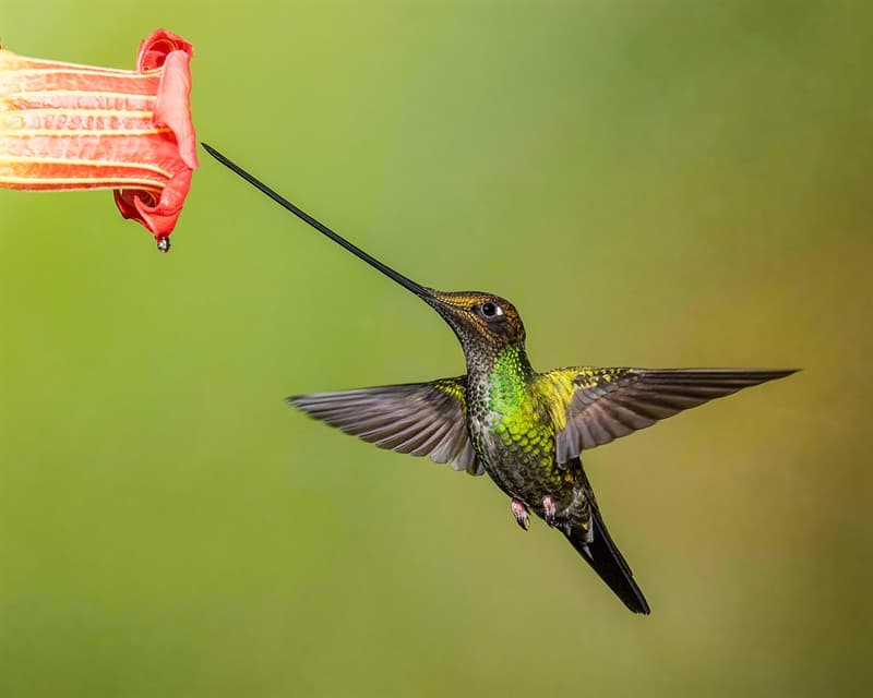 Nature Trivia Question: Which of these is not true about hummingbirds?