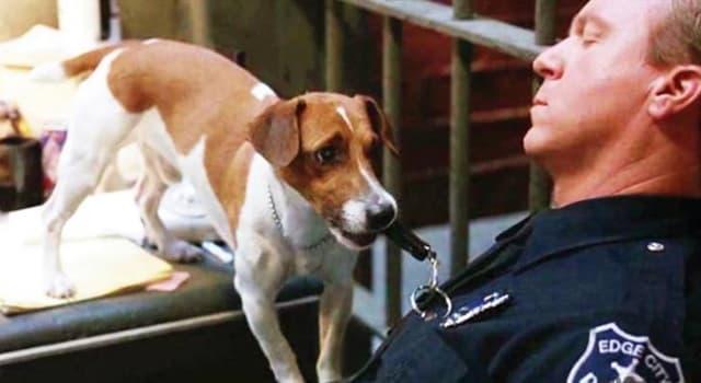 """Películas Pregunta Trivia: ¿De qué raza era Milo, el perro de la película """"La máscara"""" de 1994?"""