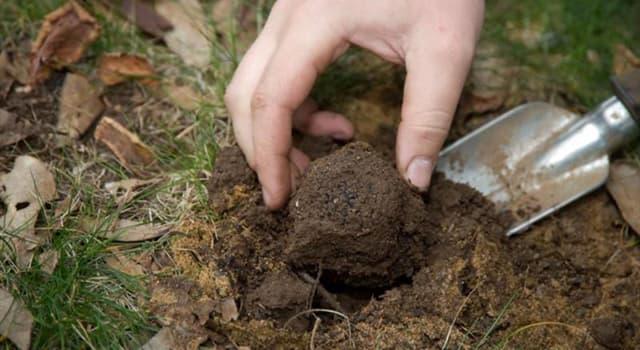 Naturaleza Pregunta Trivia: ¿Qué hongos tienen cuerpos fructíferos que crecen bajo tierra?