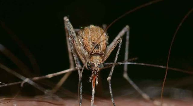 Cultura Pregunta Trivia: ¿Por qué pican los mosquitos más a unas personas que a otras?