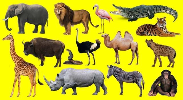 """Naturaleza Pregunta Trivia: ¿Por qué se caracteriza el """"ciervo de copete""""?"""