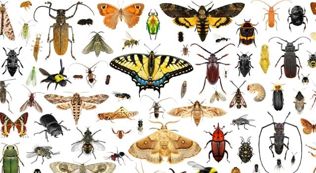 Naturaleza Pregunta Trivia: ¿Qué caracteriza a los insectos lampíridos?