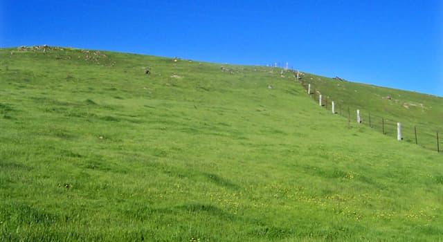 """Naturaleza Pregunta Trivia: ¿Qué es la denominada """"angula de campo"""" o """"angula de monte""""?"""