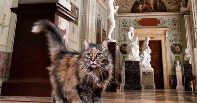 """Cultura Pregunta Trivia: ¿Qué importante museo cuenta con una """"Patrulla de felinos""""?"""