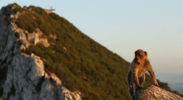 Naturaleza Pregunta Trivia: ¿Qué lugar de la península Ibérica presume de ser el único sitio en Europa que cuenta con monos en libertad?