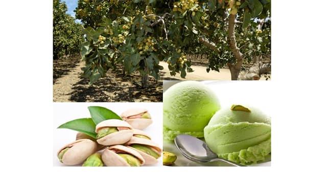 Naturaleza Pregunta Trivia: ¿Qué parte del pistacho se utiliza para usos culinarios?