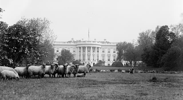Historia Pregunta Trivia: ¿Qué presidente de los Estados Unidos tenía un rebaño de borregos en la Casa Blanca?