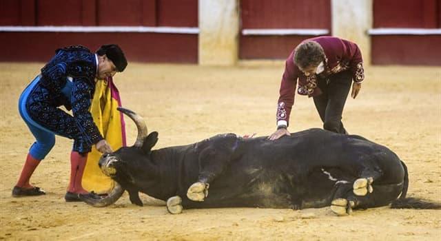Sociedad Pregunta Trivia: ¿Qué son las corridas de toros para los antitaurinos?