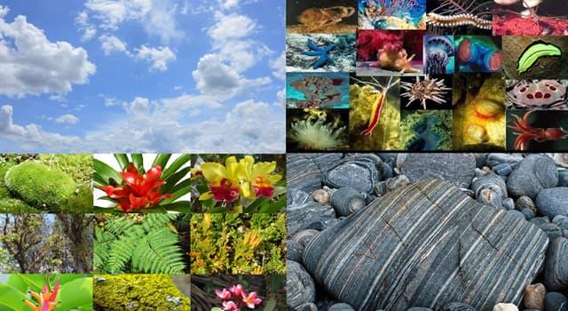 """Naturaleza Pregunta Trivia: ¿Qué son las """"Filicopsidas""""?"""