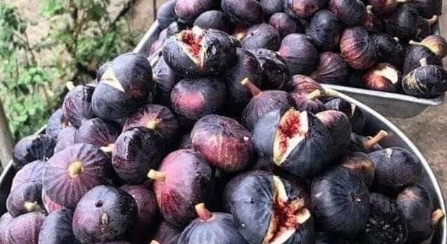 Naturaleza Pregunta Trivia: ¿Qué tipo de fruto es el higo?