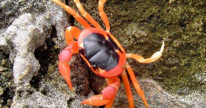 Cultura Pregunta Trivia: ¿Quién es autor del cuento ¨Los cangrejos caminan sobre la isla¨?
