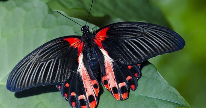 Naturaleza Pregunta Trivia: ¿Cómo reconocen los sabores las mariposas?